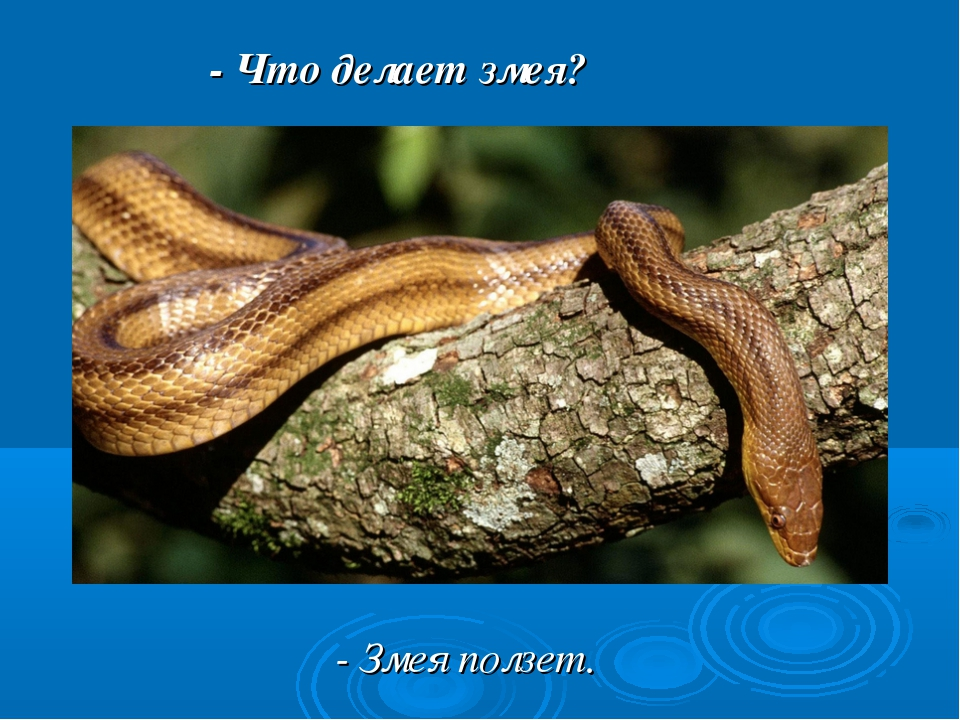 - Что делает змея? - Змея ползет.