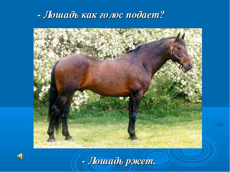 - Лошадь как голос подает? - Лошадь ржет.