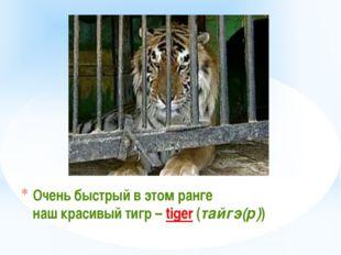 Очень быстрый в этом ранге наш красивый тигр – tiger (тайгэ(р))