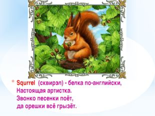 Squrrel (сквирэл) - белка по-английски, Настоящая артистка. Звонко песенки по