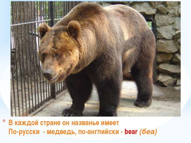В каждой стране он названье имеет По-русски - медведь, по-английски - bear (б...