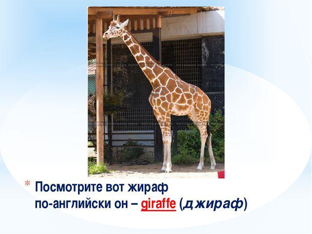 Посмотрите вот жираф по-английски он – giraffe (джираф)