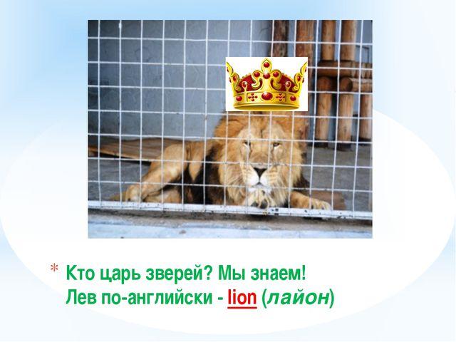 Кто цaрь зверей? Мы знаем! Лев по-английски - lion (лайон)