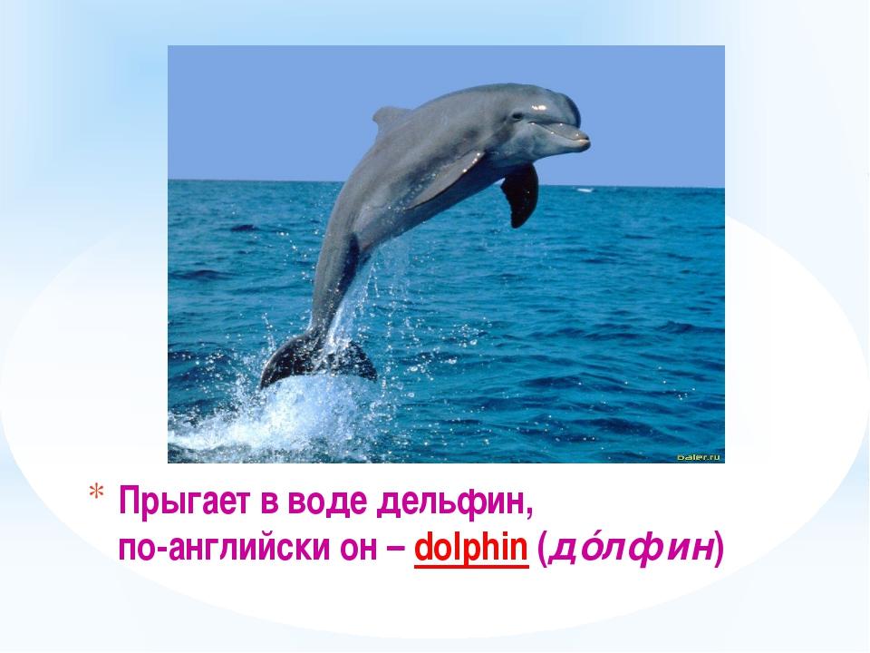 Прыгает в воде дельфин, по-английски он – dolphin (дóлфин)