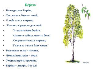 Берёза Благодатная Берёза, Ты символ Родины моей, О тебе стихи и проза, Ты св