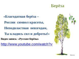 Берёза «Благодатная берёза – России символ красоты, Неподвластная невзгодам,