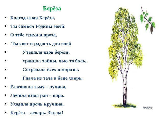 Берёза Благодатная Берёза, Ты символ Родины моей, О тебе стихи и проза, Ты св...