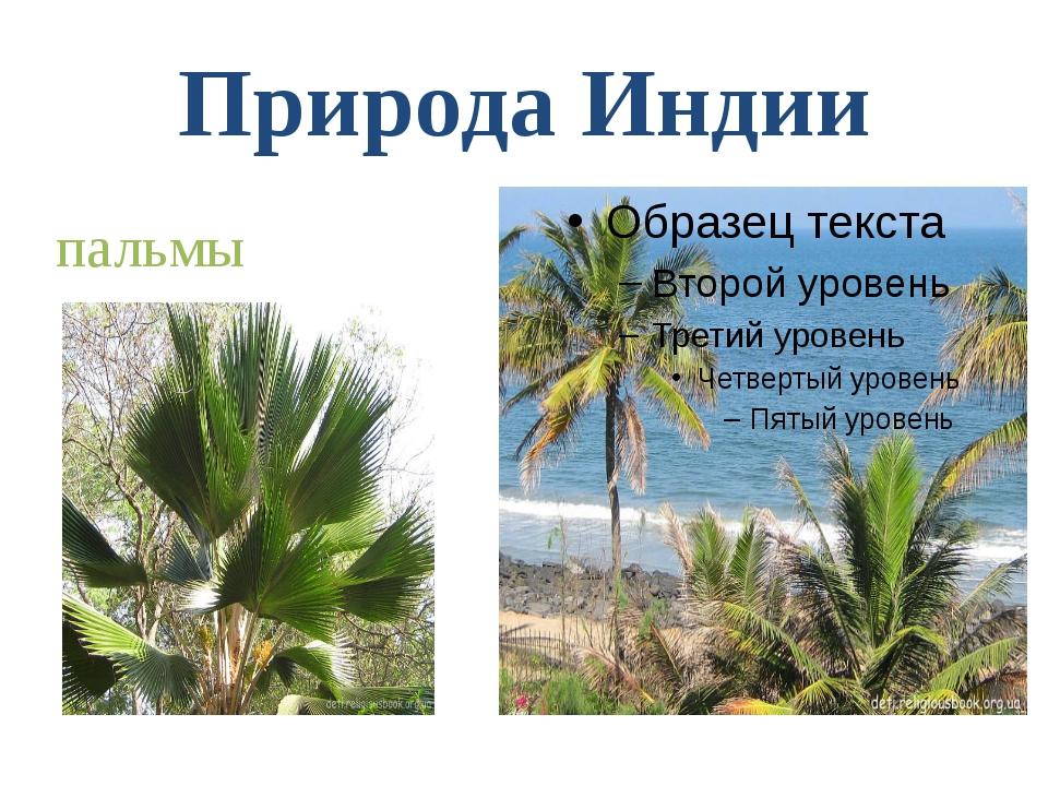 Природа Индии пальмы