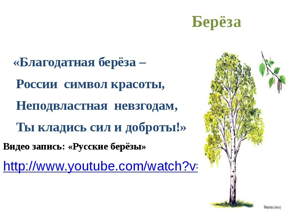 Берёза «Благодатная берёза – России символ красоты, Неподвластная невзгодам,...