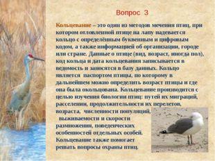 Вопрос 3 Кольцевание – это один из методов мечения птиц, при котором отловлен