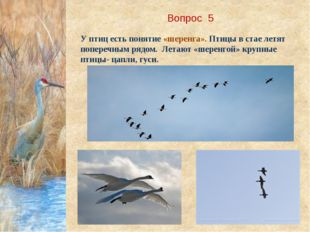 Вопрос 5 У птиц есть понятие «шеренга». Птицы в стае летят поперечным рядом.