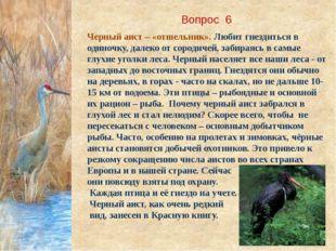 Вопрос 6 Черный аист – «отшельник». Любит гнездиться в одиночку, далеко от со