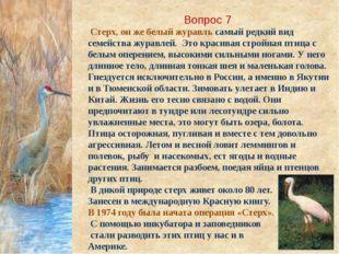 Вопрос 7 Стерх, он же белый журавль самый редкий вид семейства журавлей. Это
