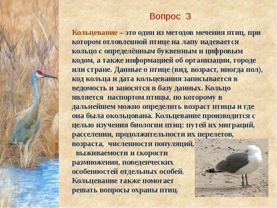 Вопрос 3 Кольцевание – это один из методов мечения птиц, при котором отловлен...