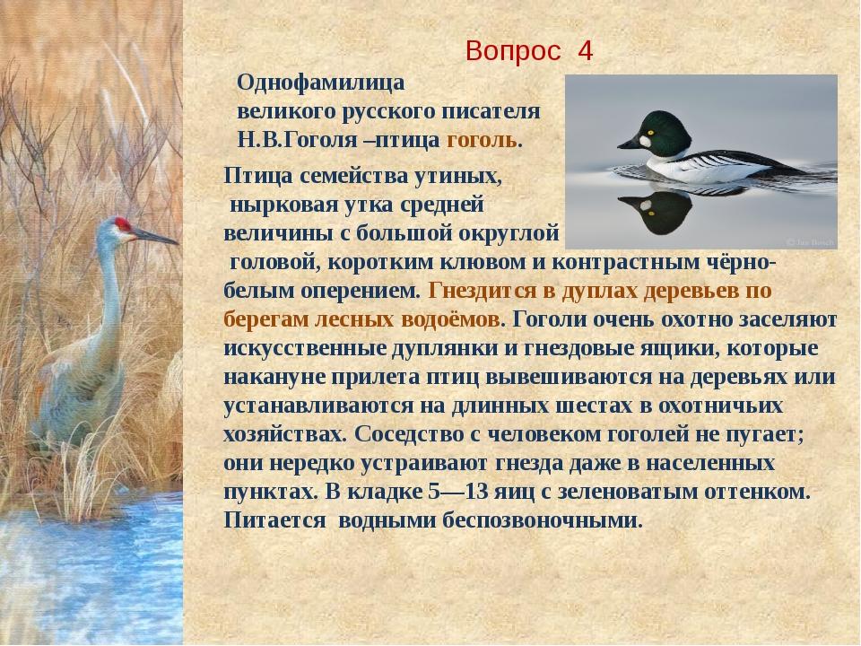 Вопрос 4 Однофамилица великого русского писателя Н.В.Гоголя –птица гоголь. Пт...