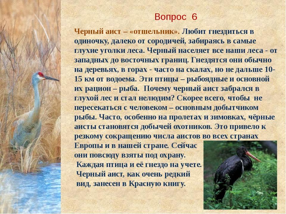 Вопрос 6 Черный аист – «отшельник». Любит гнездиться в одиночку, далеко от со...