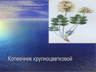 Копеечник крупноцветковой Принятые и рекомендуемые меры охраны. Охраняется н