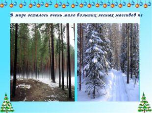 В мире осталось очень мало больших лесных массивов не тронутых человеком.