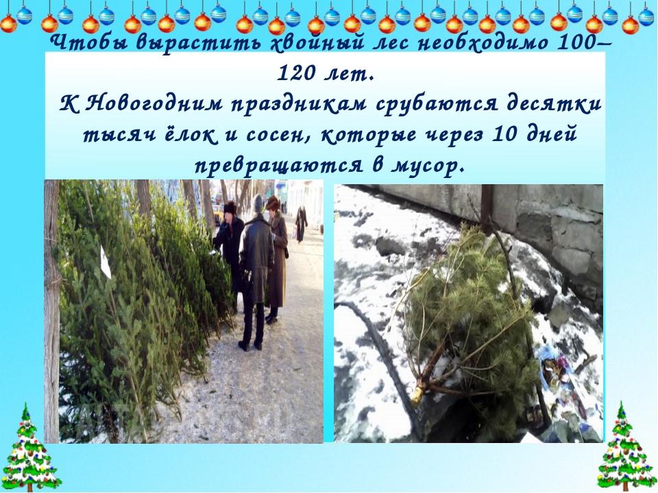 Чтобы вырастить хвойный лес необходимо 100–120 лет. К Новогодним праздникам...