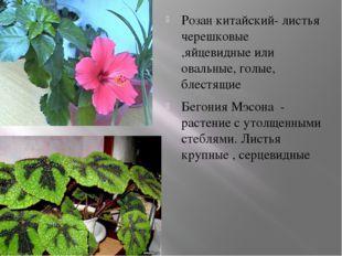 Розан китайский- листья черешковые ,яйцевидные или овальные, голые, блестящи