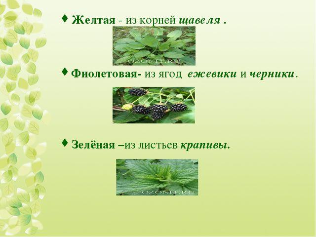 Желтая - из корней щавеля . Фиолетовая- из ягод ежевики и черники. Зелёная –и...