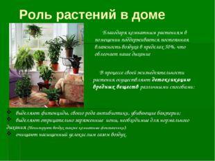 Благодаря комнатным растениям в помещении поддерживается постоянная влажност