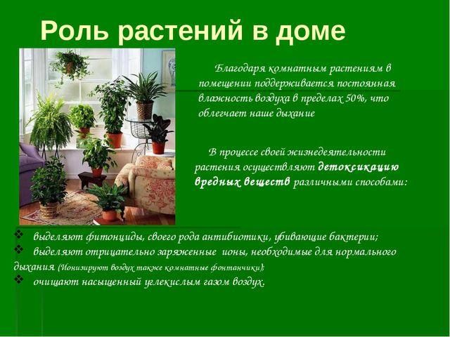 Благодаря комнатным растениям в помещении поддерживается постоянная влажност...