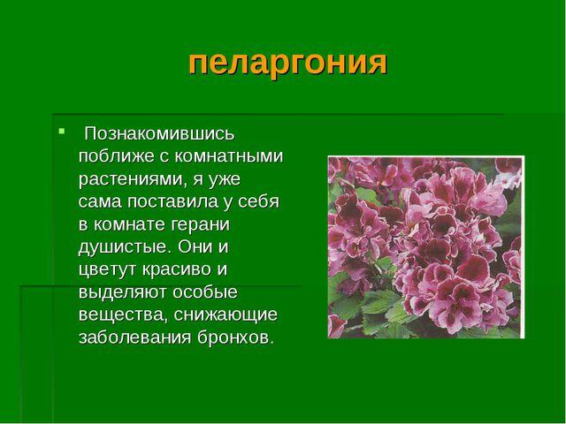 пеларгония Познакомившись поближе с комнатными растениями, я уже сама постави...