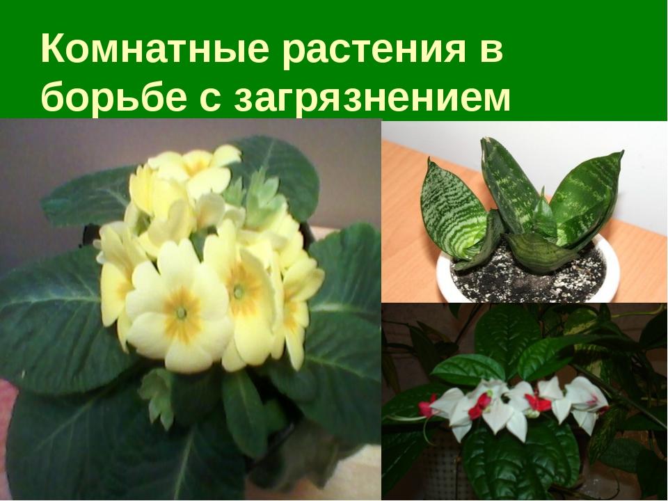 Комнатные растения в борьбе с загрязнением
