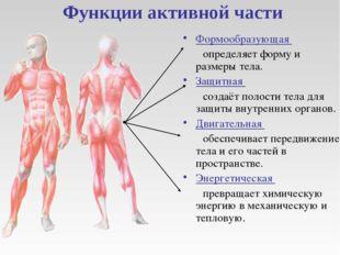 Функции активной части Формообразующая определяет форму и размеры тела. Защи