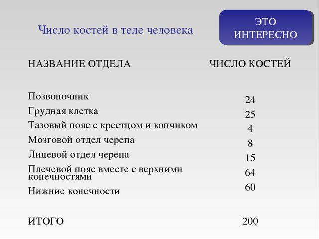 ЭТО ИНТЕРЕСНО Число костей в теле человека НАЗВАНИЕ ОТДЕЛАЧИСЛО КОСТЕЙ Позво...