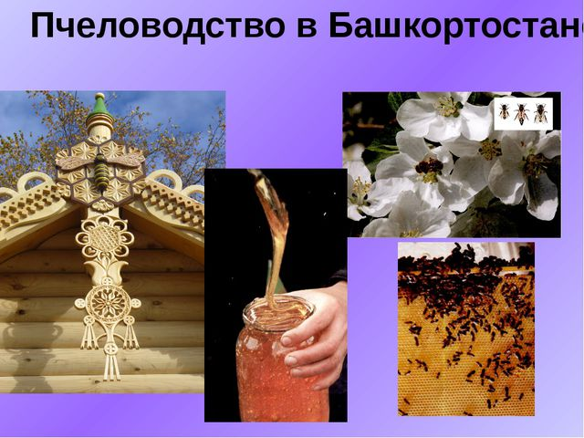 Пчеловодство в Башкортостане