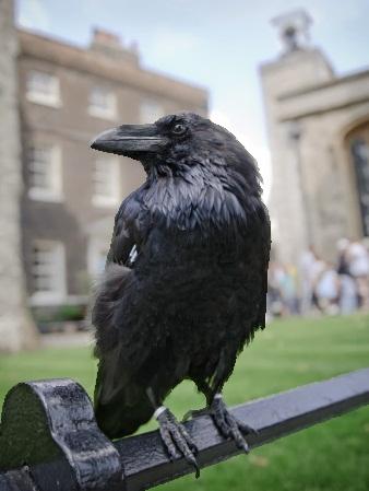 http://1.bp.blogspot.com/-JGgfqSO3js4/UqBk0x4jusI/AAAAAAAAA3g/5oC6NQYjaUE/s1600/Tower+Raven.jpg
