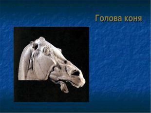 Голова коня