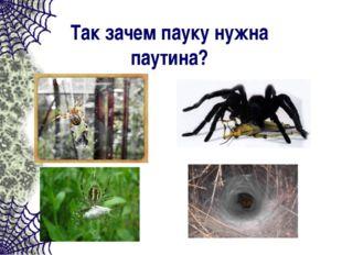 Так зачем пауку нужна паутина?