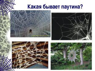 Какая бывает паутина?