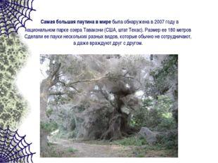 Самая большая паутина в миребыла обнаружена в 2007 году в национальном парк