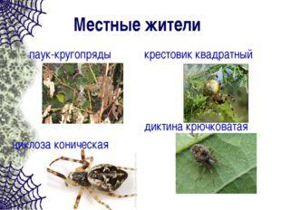 Местные жители паук-кругопряды циклоза коническая крестовик квадратный диктин