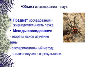 Объект исследования – паук. Предмет исследования - жизнедеятельность паука. М