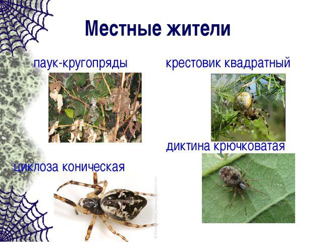 Местные жители паук-кругопряды циклоза коническая крестовик квадратный диктин...