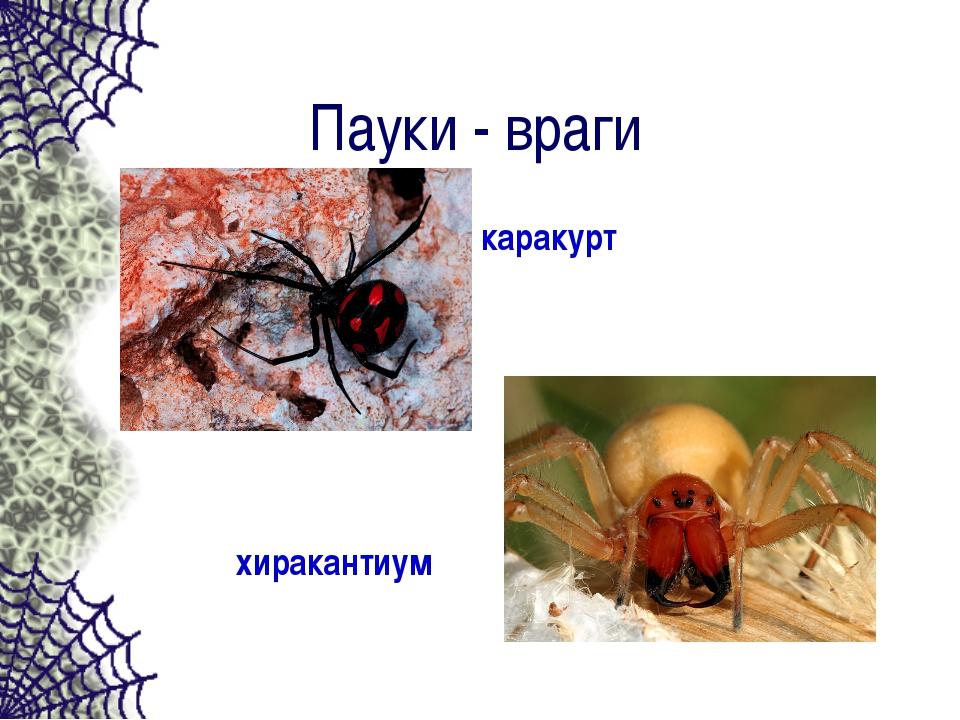 Пауки - враги хиракантиум каракурт