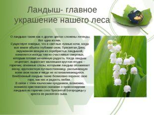 Ландыш- главное украшение нашего леса О ландыше также как о других цветах сло