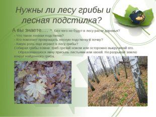 Нужны ли лесу грибы и лесная подстилка? А вы знаете…. - Без чего не будут в л