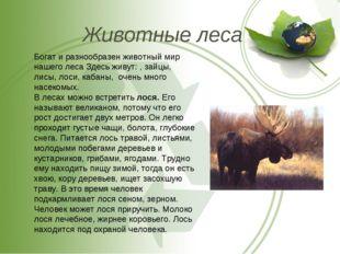 Животные леса Богат и разнообразен животный мир нашего леса Здесь живут: , за