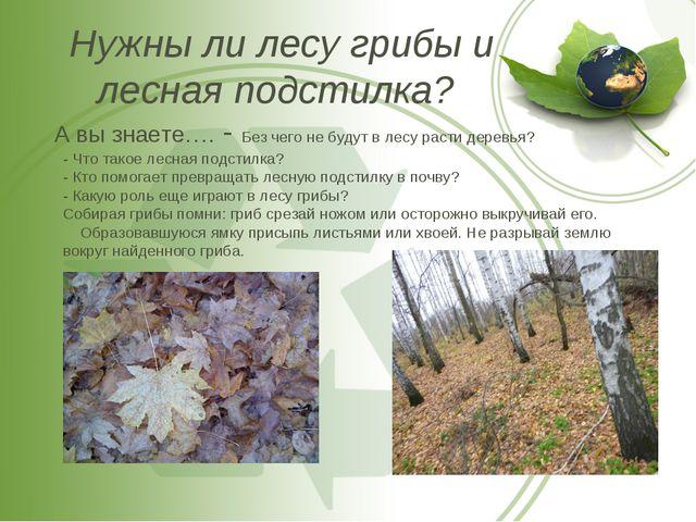 Нужны ли лесу грибы и лесная подстилка? А вы знаете…. - Без чего не будут в л...