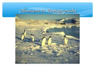 Обитатели Антарктиды