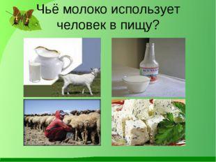 Чьё молоко использует человек в пищу?