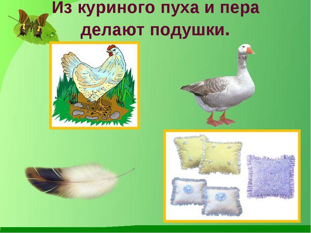 Из куриного пуха и пера делают подушки.