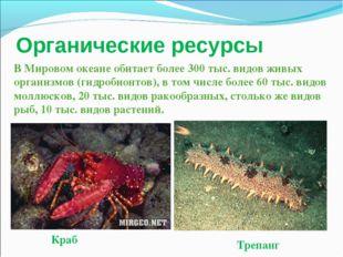 Органические ресурсы Краб Трепанг В Мировом океане обитает более 300 тыс. вид