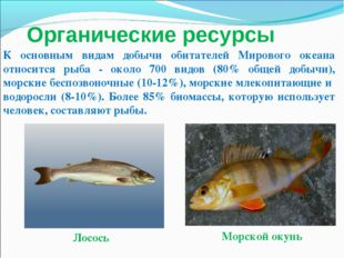 Лосось Морской окунь К основным видам добычи обитателей Мирового океана относ